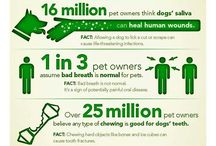 all about pets