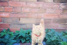 Precious Pets / by Elizabeth Gonda