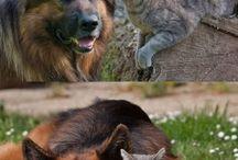 Gatos y perros <3