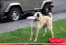 funnydogs