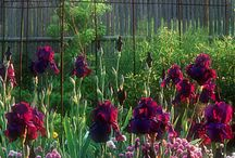 bk yard/gardens