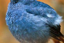 Fat little birdies !