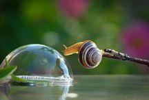 Snail Says......... / by Dan Herzing