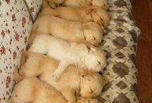 Puppy Love / by lauren drell