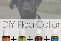 Pet Care Naturally / by Cotton Berry Quilts