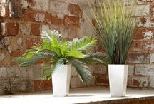 Replica Plants / We all enjoy plants in our home or office. The presence of real or artificial plants provides real benefits: helping people feel good, fewer health complaints and improved standards of work and learning.   The only limit is your imagination. Entrance lobby / receptions / eating areas / offices / showrooms / meeting rooms / event and exhibition space...