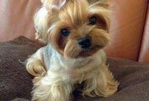 Puppies x:)