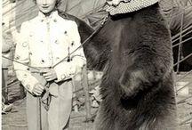 Αρκούδες / οι αρκούδες
