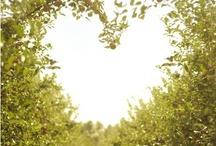 hearts xx