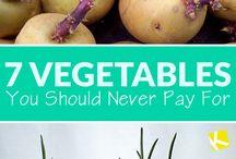 7 vegetale pt. care nu trebuie sa platesti