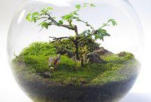 Terrarium Table garden Aquarium