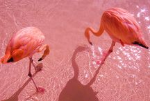 Flamingo / by Melissa .