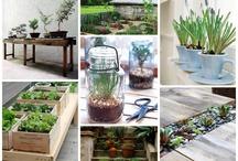 Garden / Ideas for upgrading the garden.