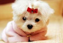 Cute doggies