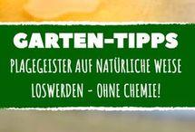 Garten Tips- Schnecken