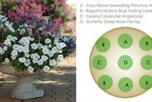 Gardening & Backyard Flower Ideas