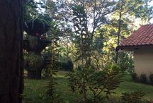 Cabañas Las Morenas Mazamitla / Un lugar hermoso rodeado de naturaleza para descansar!!