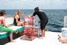 Destin Dolphin and Sunset Cruises   SunVenture Cruises