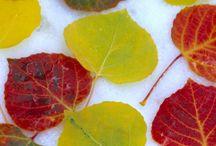 Autumn / Fantastic colours