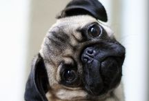 Pug we love! / Mopsiki