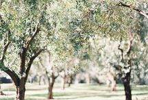 сады и деревья