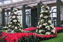 Jardines navideños / La Navidad llega a los jardines