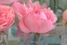 The English Rose  / Take one simple Rose and your imagination
