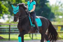 Tack I want for new horse