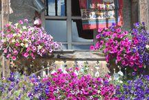 Livigno | Flowers colors explosion / Quante volte passeggiando per #Livigno avete visto balconi fioriti come questi?!  How many times have you seen balcony flowers like these ones, while walking in Livigno?