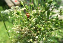 Hyönteiset puutarhassa - Garden insects
