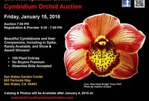 Brookside's favorite Orchid Shows / Here are some of our favorite things.
