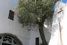 Greece - Olive Trees
