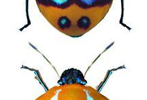 hmyzáci