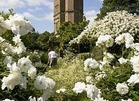 British Gardens / The splendour and beauty of the British Garden - as featured at stately homes and Gardens open to the public.