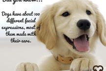 Doggie Treats / Betcha didn't know this about doggies.....