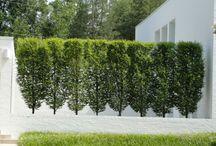 żywopłoty/hedge