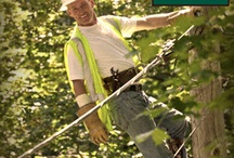 Tree Service / by Arroyo Tree Services