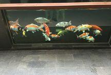 PEMANDANGAN / Cantik-cantik kali ikan-ikan ni