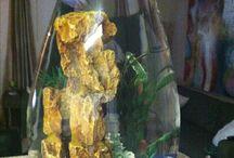 aqarium betta fish