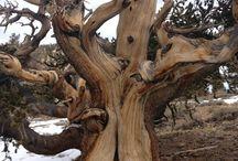 Shirley Germenis / Tree