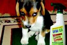 Pet Mess Cleaning Tips / Tips for cleaning pet messes.