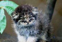 felini, grandie e piccoli, rari ed esotici / felini