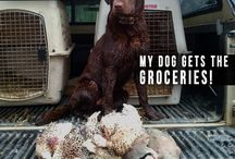 Man's best friend: hunting edition / by ExtremeImpact Ammo