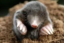 Mole Love