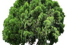 Trees&people