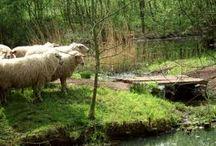 Natuurgebied Zwart water | DeFruitschuur.com