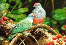 Фруктовые голуби