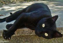 Gatos / Mascotas