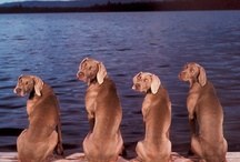 Dogs / by Kari Bahlenberg