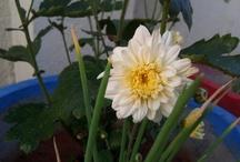My lil garden..